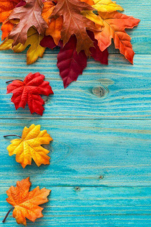 fall pretty pic